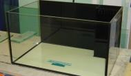 70 gallon Rimless aquarium